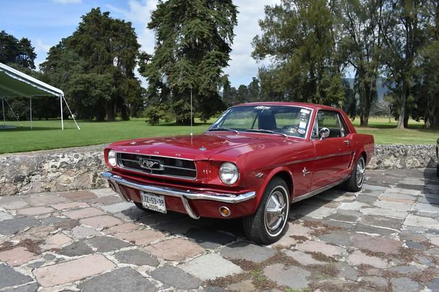 Mustang EdoMex  (115)