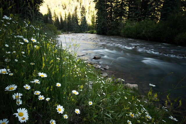 Rapids and Flowers