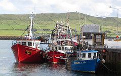 Dingle Harbour in July