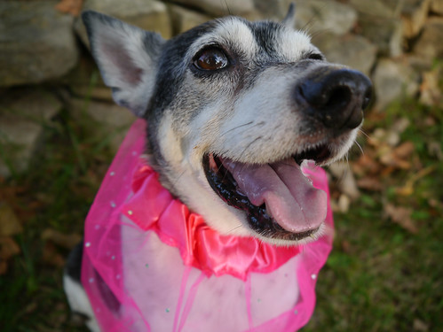 2015-09-16 - Peedee in Pink - 0033 [flickr]