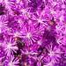 flowers by SoulRiser