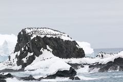img_3046 Elephant Island 1854