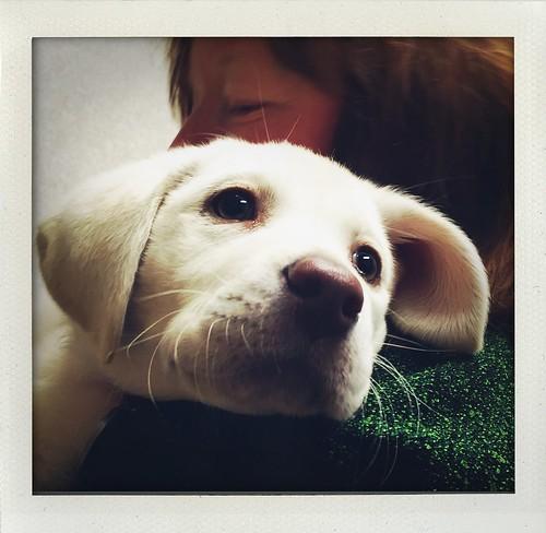 puppy 💗
