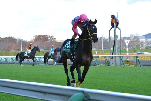 20151115福島11R 福島記念 メイショウカンパク 返し馬