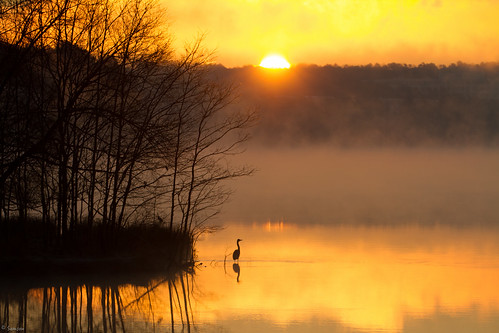trees mist lake reflection tree bird heron sunrise canon eos nc outdoor northcarolina 7d crabtree morrisville morningmist canonlens ncstateparks canoneos7d lakecrabtreecountypark canon7d ncpark ef70300mmf456lisusm 7def100mm ncraleighraleigh nccaryweathersunlight
