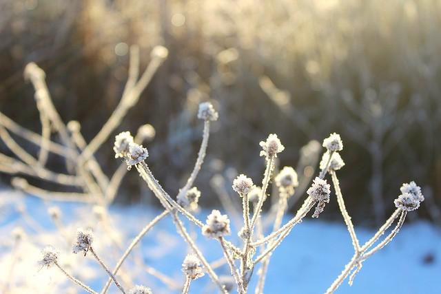 Winter wonderland 46