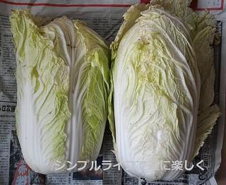 白菜保存、2玉