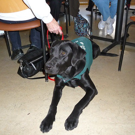 2014 Guide Dogs