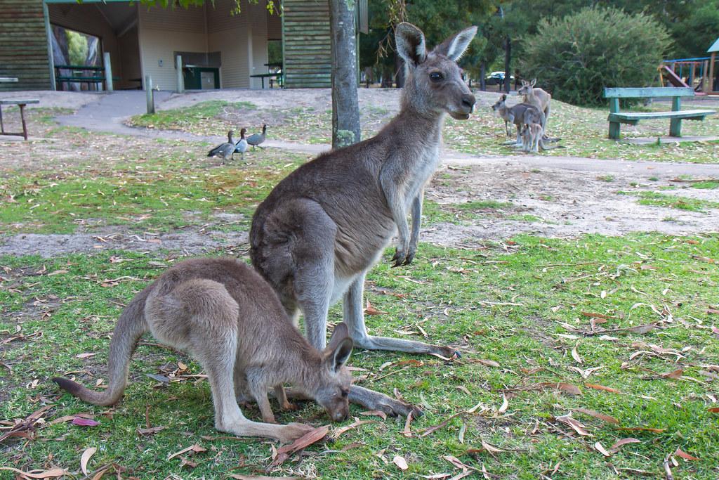 Australia, Grampians National Park