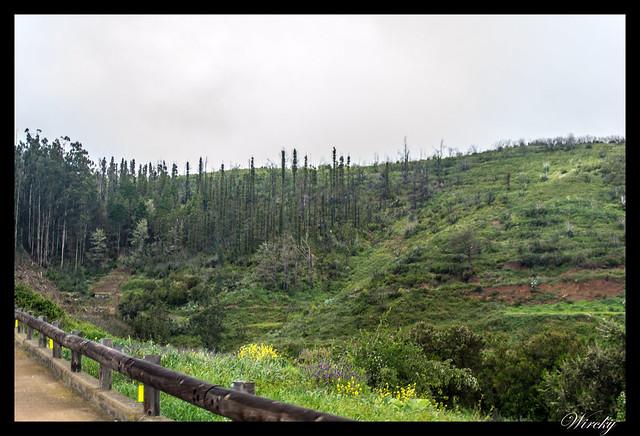 Tenerife Santiago del Teide acantilados los Gigantes Vilaflor - Bosque de Erjos de El Tanque