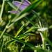Hidden in the grass by Tropmor
