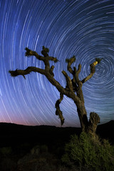 Joshua Tree Star Trails - Death Valley National Park