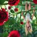 The rose's revenge by John Wilhelm is a photoholic