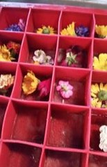 Flowers in Tray
