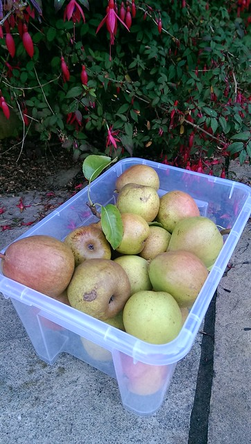 Autumn Harvest, all pears, only two apples this year.