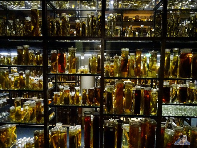 Naturkunde Museum Berlin 17.07.2015  094