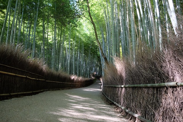Bamboo Groves at Arashiyama Kyoto