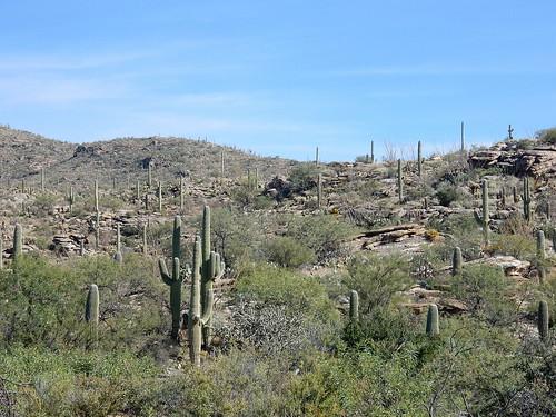 Saguaro NP - 2