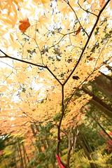 151107_TsukechiKyou_24