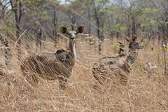 malawi 358