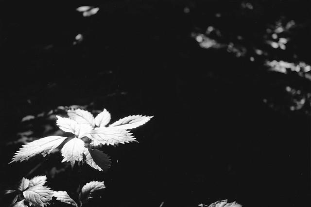 Leica Ⅲf + Elmar 5cm F3.5 + neopan 100 across