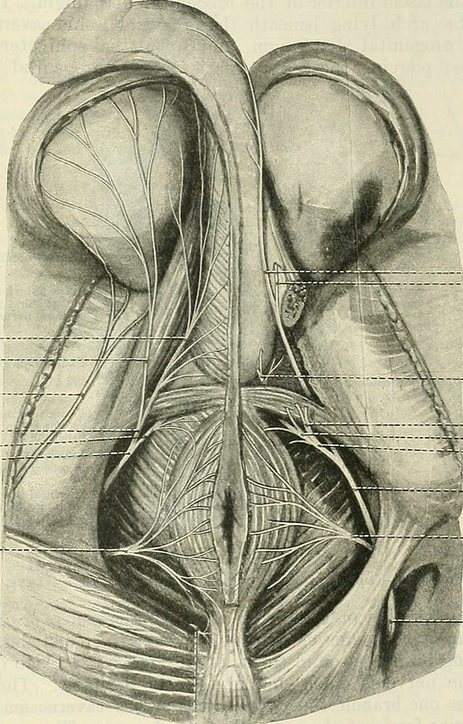 """Image from page 772 of """"Cunningham's Text-book of anatomy"""" (1914)"""