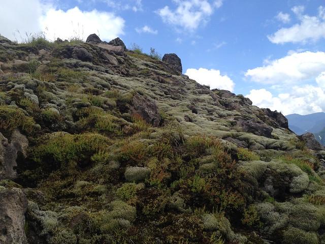 焼岳 中尾温泉ルート 焼岳展望台直下 白い苔
