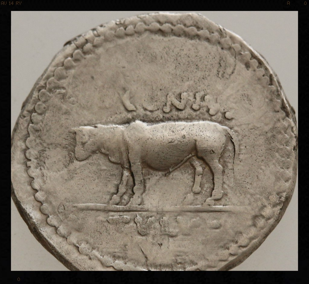 Denario de Julio César. Q VOCONIVS, becerro de pie a izquierda, VITVLVS en ex. 20988266506_cf4dcb2087_b