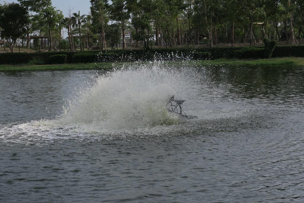 高雄市湖內區綠水塘無毒蝦 (12)