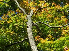 resplendant tree