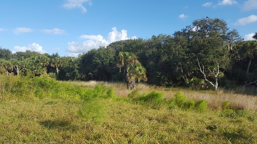 usa outdoors florida kenansville osceolacounty threelakeswildlifemanagementarea