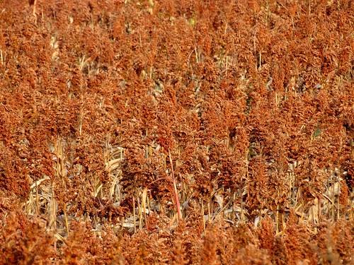 fall landscape virginia