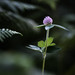 Fern and clover flower by Michel Couprie