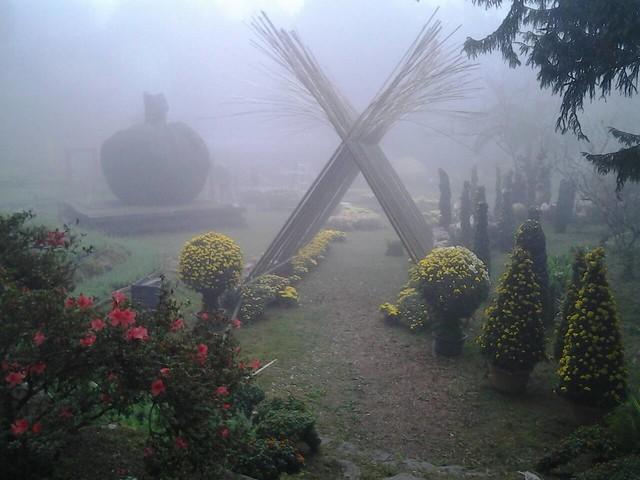 24471霧裡看花