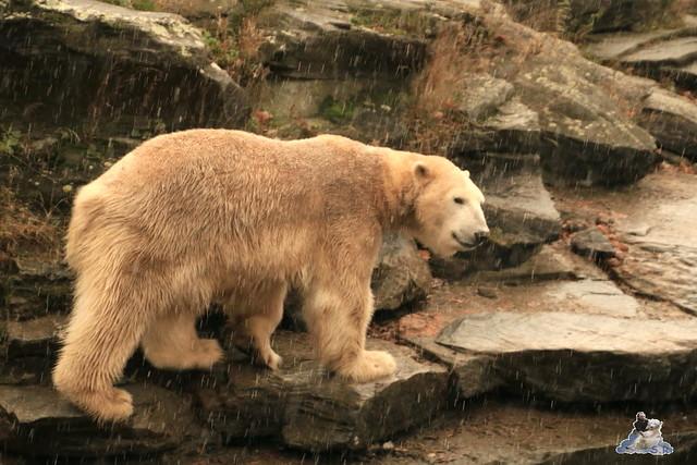 Tierpark Berlin 22.11.2015   0178