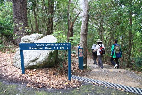 澳洲昆士蘭-Lamington NP -Caves Circuit步道指標-20141120-賴鵬智攝-2