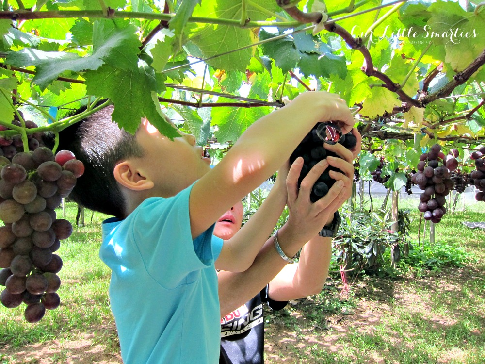 Taiwan Day 4 – Taichung City Tour