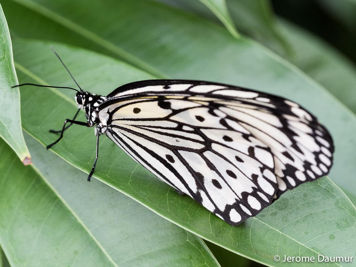 Butterflies Garden 6