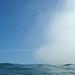 swim by vania francesca