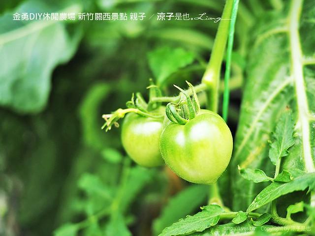 金勇DIY休閒農場 新竹關西景點 親子 60