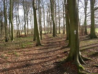 Woods near Bix winter