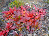 Midnight Peak Easy Scramble - August autumn colours