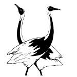 cranes-150x150-min