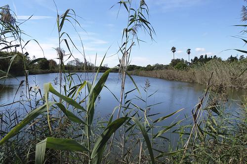 Sortida naturalista a la Pineda del Remolar (delta del Llobregat)