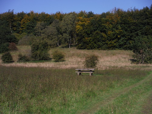 Bench on Clearing in Hursley Bottom
