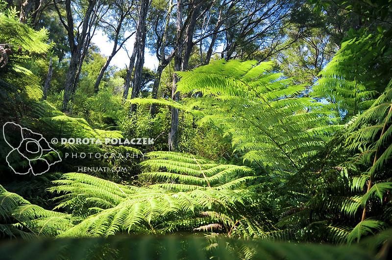 Abel Tasman NP / New Zealand
