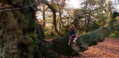 climbing-tree-martha