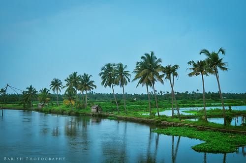kerala nature green beauty kadamakuddy kochi cochin india southindia kadamakuddyisland coconuttrees nikon d90 nikond90 ernakulam queenofarabiansea