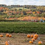 Jones Farm in Fall