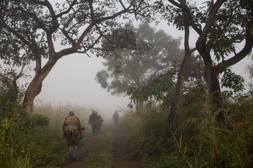 park mist elephant tree nature fog forest sunrise dawn nationalpark outdoor military brouillard patrol brume drc poaching rdc gramaba
